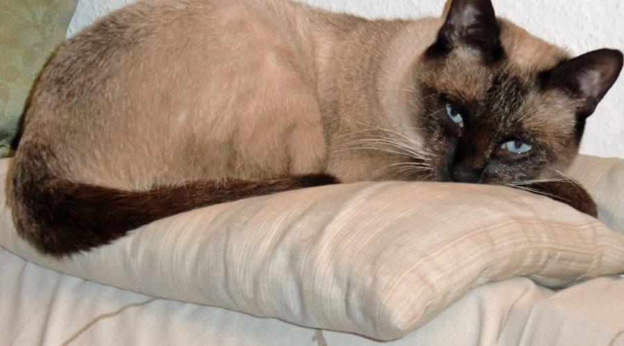 Sally Cat