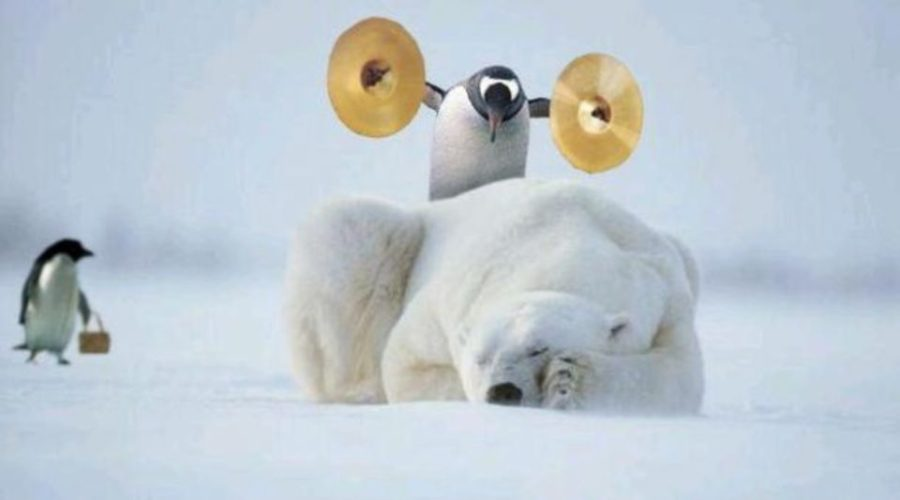 Penguin wakes up polar bear.